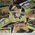 Fleece American Greetings Snap Shot of HORSES